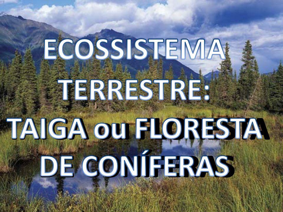 OS CAMPOS AS SAVANAS Encontradas nas Américas, África, Ásia e Austrália Pequenos arbustos e árvores de pequeno porte Pode ocorrer extensa área sem árvores