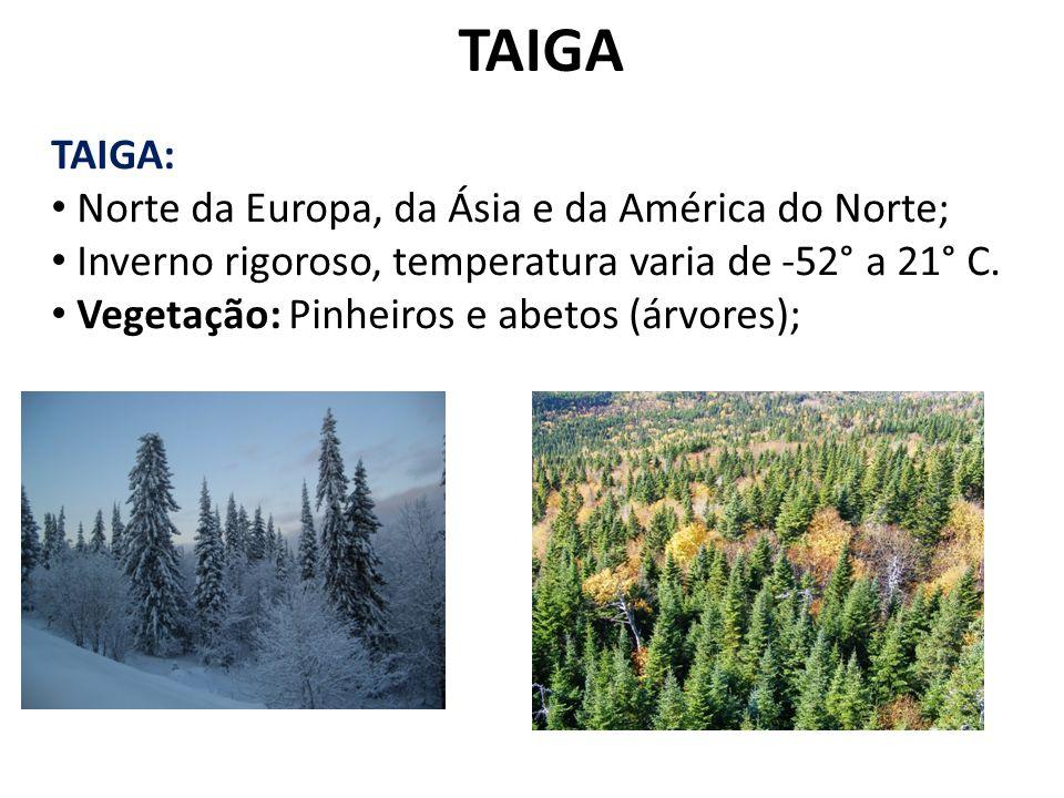 OS CAMPOS CAMPOS TEMPERADOS Encontrado nas pradarias da América do Norte e nos pampas gaúchos Vegetação predominante: Gramíneas