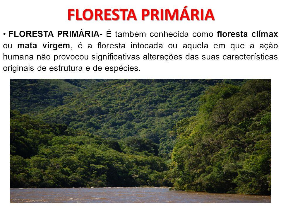 FLORESTA PRIMÁRIA FLORESTA PRIMÁRIA- É também conhecida como floresta clímax ou mata virgem, é a floresta intocada ou aquela em que a ação humana não