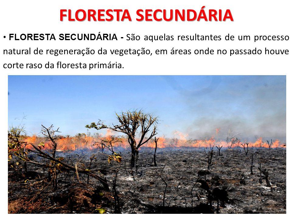 FLORESTA SECUNDÁRIA FLORESTA SECUNDÁRIA - São aquelas resultantes de um processo natural de regeneração da vegetação, em áreas onde no passado houve c
