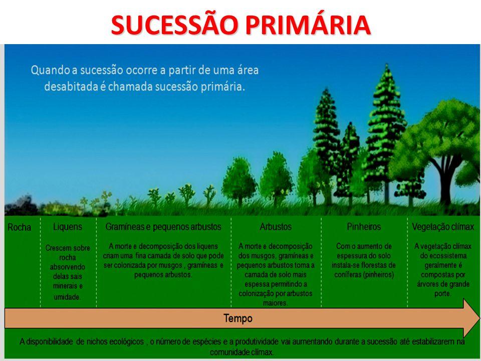 SUCESSÃO ECOLÓGICA ESPÉCIES PIONEIRAS - As espécies que resistem às adversidades do ambiente, iniciando a sua colonização.