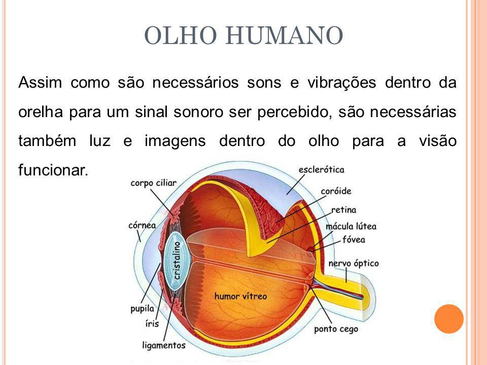 OLHO HUMANO Assim como são necessários sons e vibrações dentro da orelha para um sinal sonoro ser percebido, são necessárias também luz e imagens dent