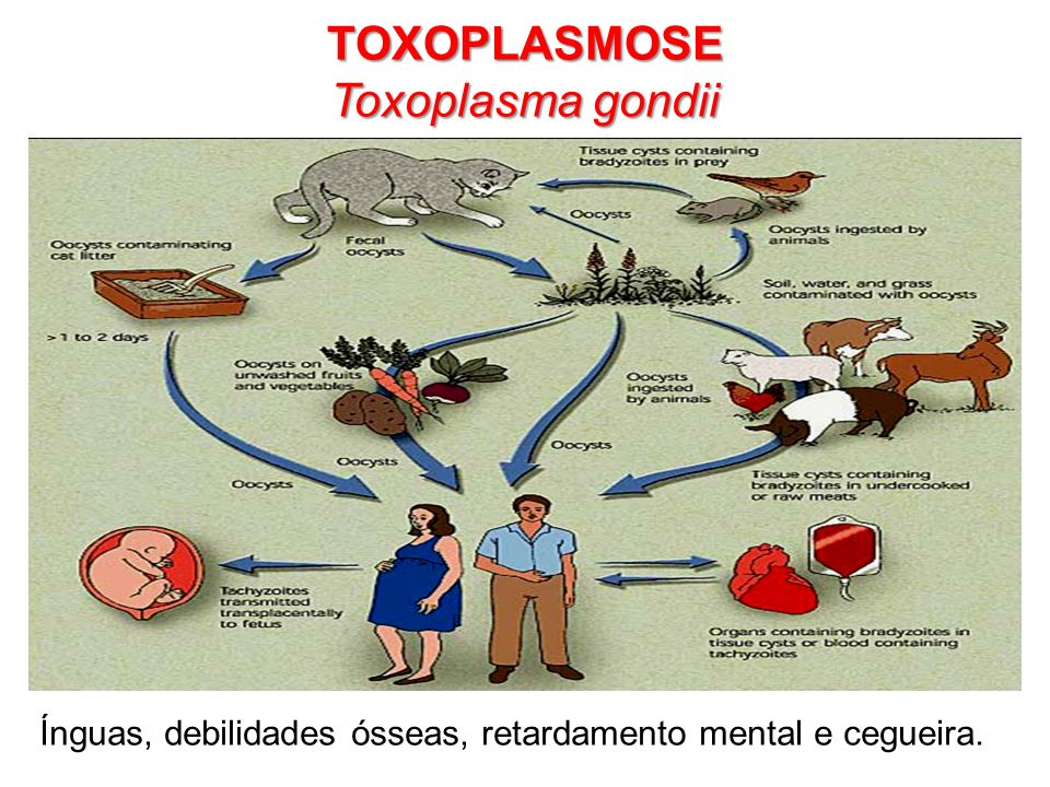 Ínguas, debilidades ósseas, retardamento mental e cegueira. TOXOPLASMOSE Toxoplasma gondii