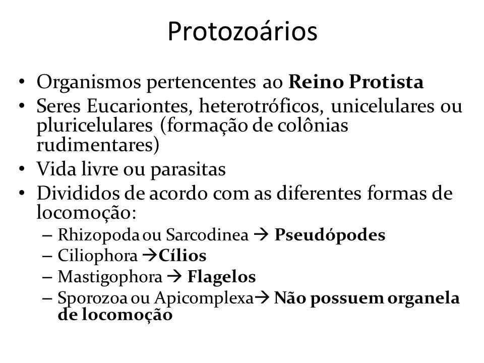 Protozoários Organismos pertencentes ao Reino Protista Seres Eucariontes, heterotróficos, unicelulares ou pluricelulares (formação de colônias rudimen