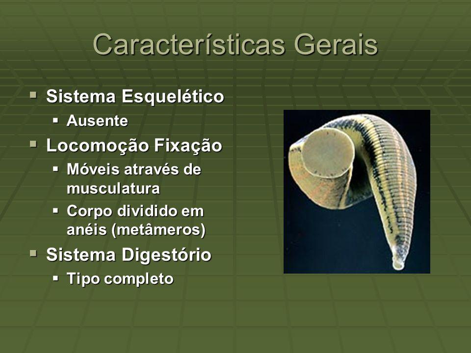 Características Gerais Sistema Excretor Sistema Excretor Tipo metanefridiano.