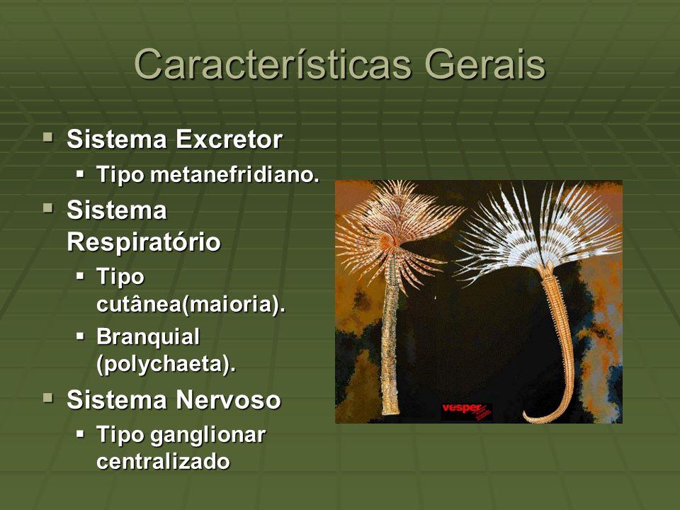 Características Gerais Sistema Excretor Sistema Excretor Tipo metanefridiano. Tipo metanefridiano. Sistema Respiratório Sistema Respiratório Tipo cutâ