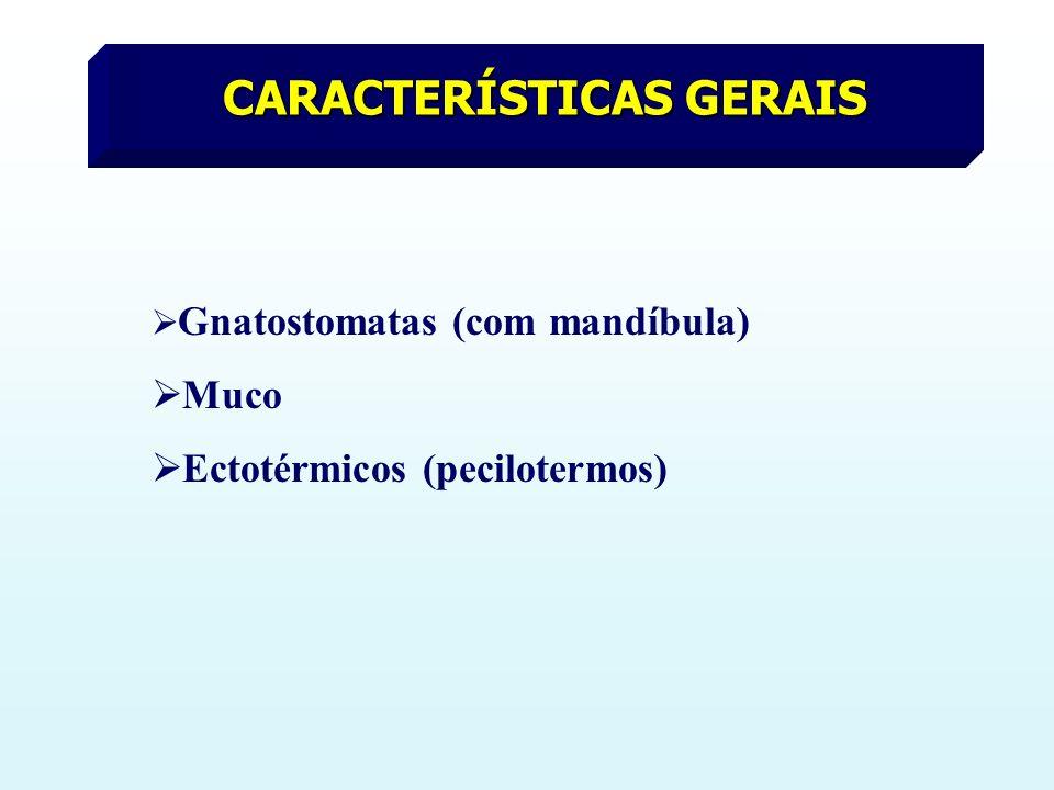 CARACTERÍSTICAS GERAIS Gnatostomatas (com mandíbula) Muco Ectotérmicos (pecilotermos)