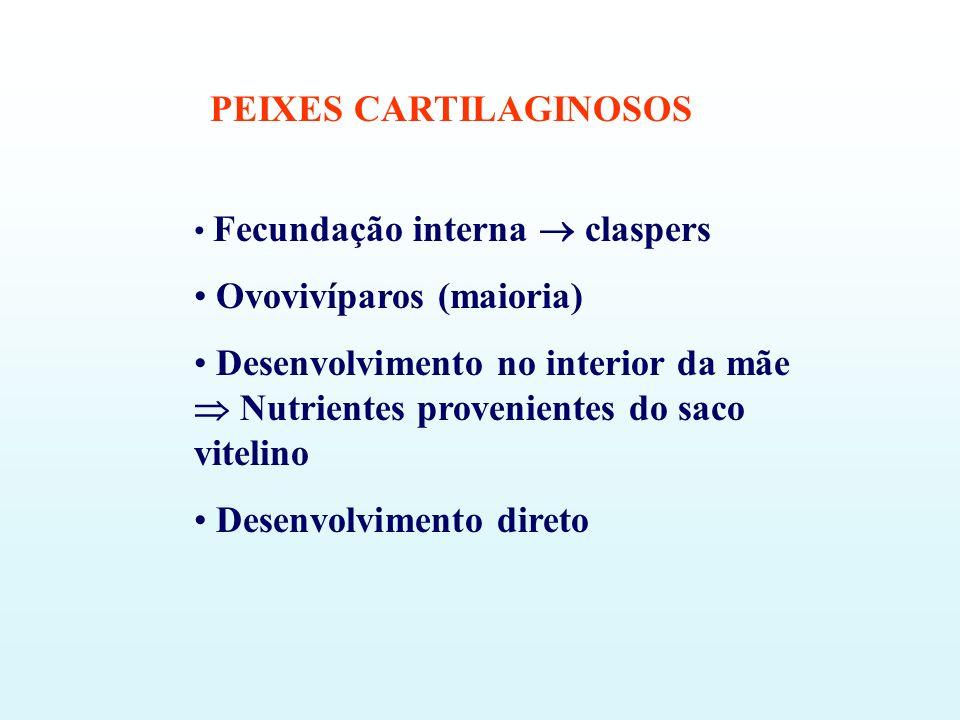 PEIXES CARTILAGINOSOS Fecundação interna claspers Ovovivíparos (maioria) Desenvolvimento no interior da mãe Nutrientes provenientes do saco vitelino D