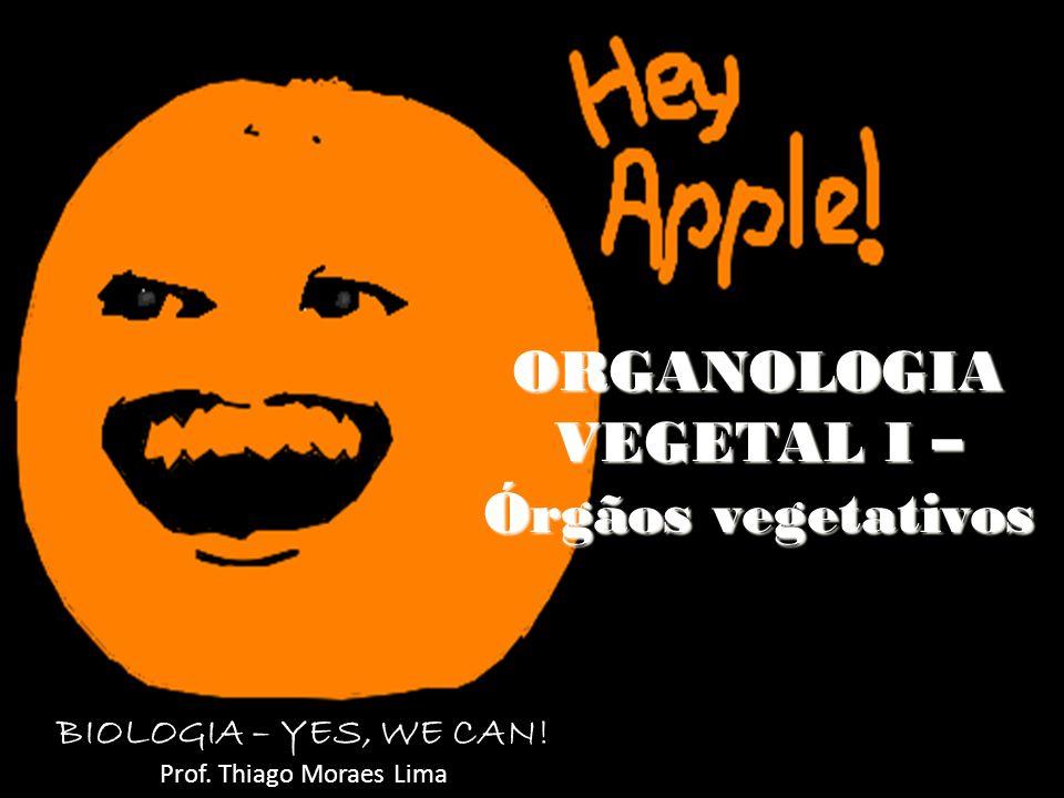 ORGANOLOGIA VEGETAL I – Órgãos vegetativos BIOLOGIA – YES, WE CAN! Prof. Thiago Moraes Lima