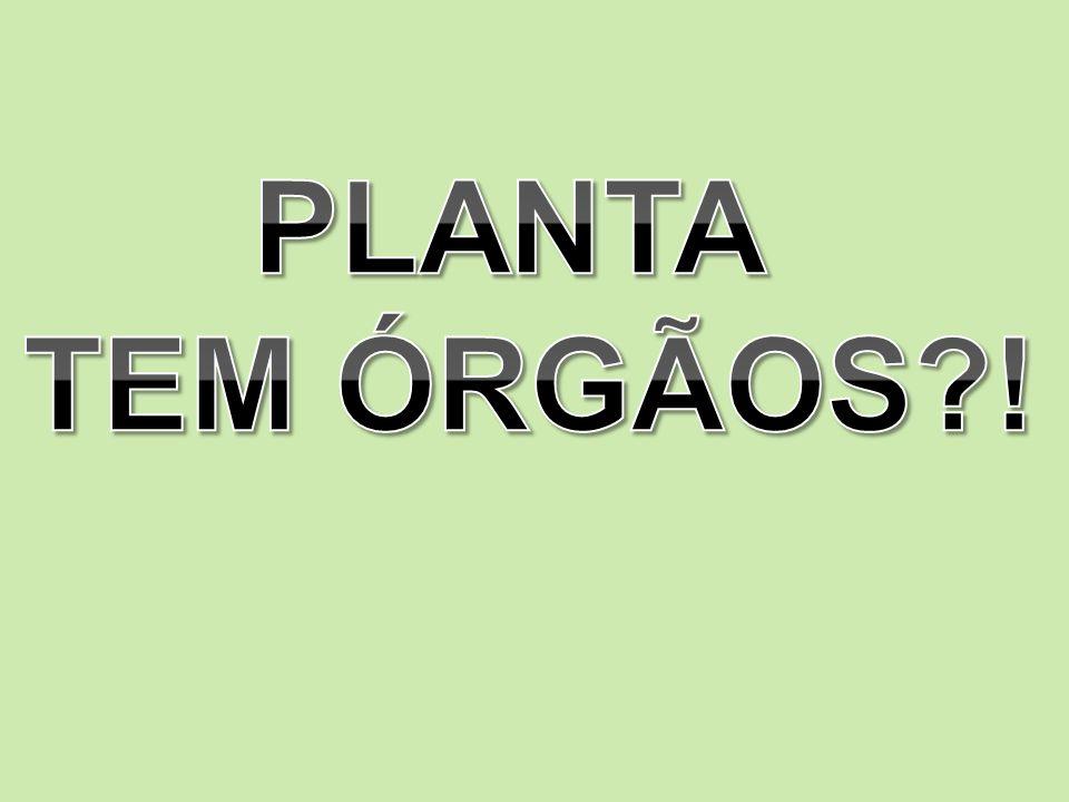 ORGANOLOGIA Sim, as plantas tem órgãos!.