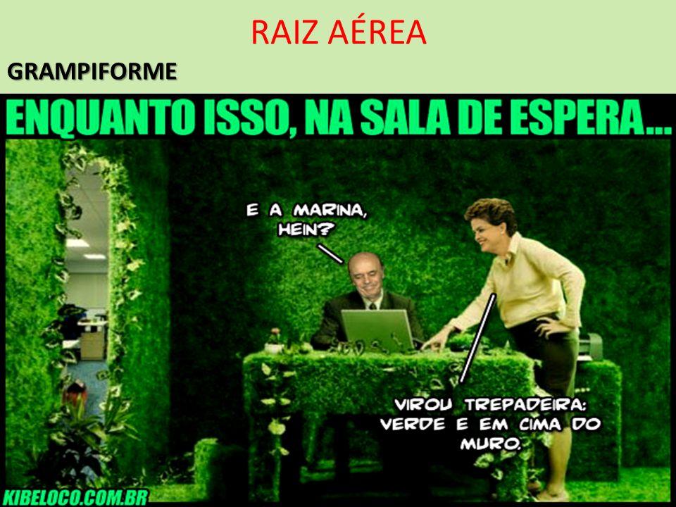RAIZ AÉREAGRAMPIFORME