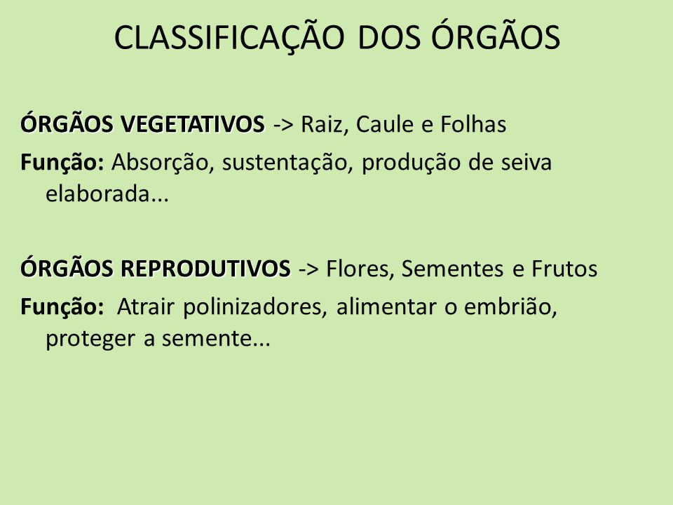 CLASSIFICAÇÃO DOS ÓRGÃOS ÓRGÃOS VEGETATIVOS ÓRGÃOS VEGETATIVOS -> Raiz, Caule e Folhas Função: Absorção, sustentação, produção de seiva elaborada... Ó