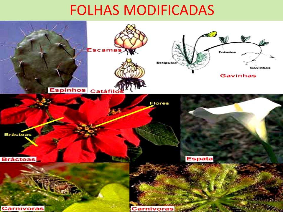 FOLHAS MODIFICADAS