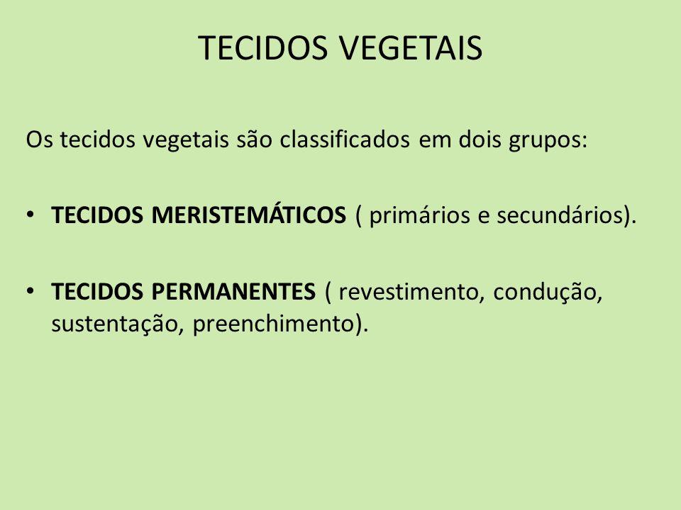 TECIDOS VEGETAIS Os tecidos vegetais são classificados em dois grupos: TECIDOS MERISTEMÁTICOS ( primários e secundários). TECIDOS PERMANENTES ( revest