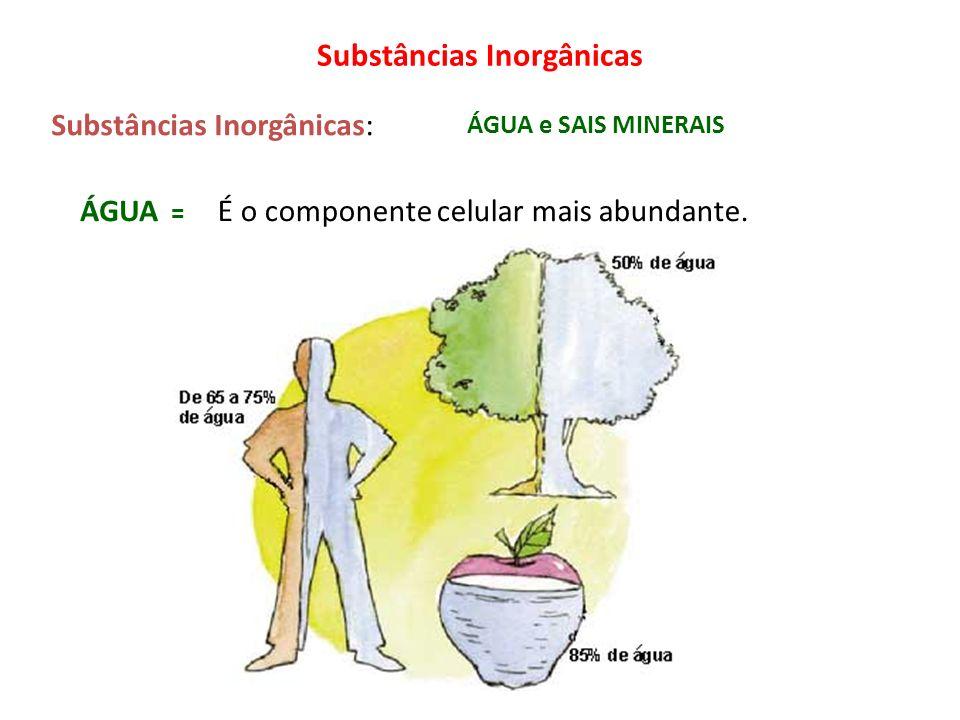 É o componente celular mais abundante. ÁGUA e SAIS MINERAIS Substâncias Inorgânicas Substâncias Inorgânicas: ÁGUA =