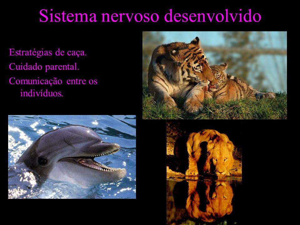 Sistema nervoso desenvolvido Estratégias de caça. Cuidado parental. Comunicação entre os indivíduos.