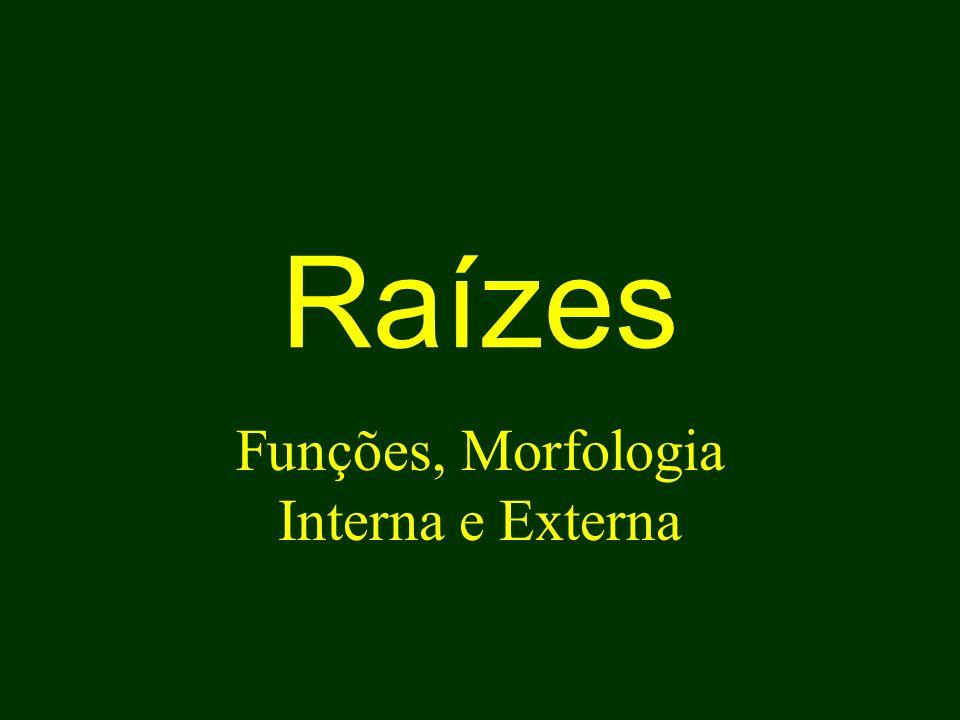 Raízes Funções, Morfologia Interna e Externa