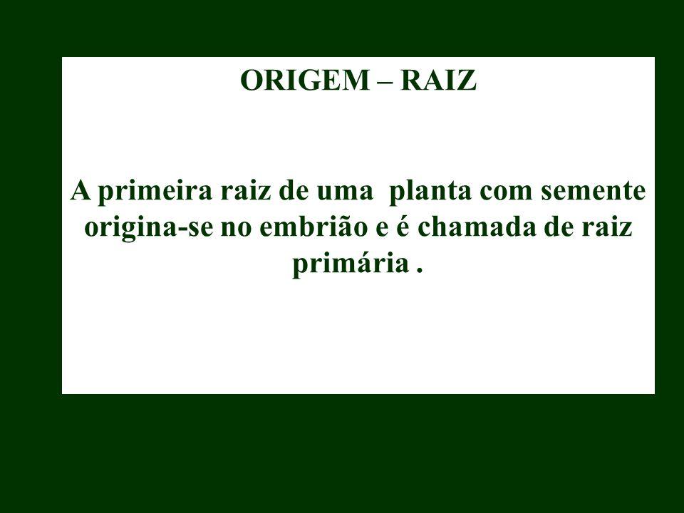 ORIGEM – RAIZ A primeira raiz de uma planta com semente origina-se no embrião e é chamada de raiz primária.