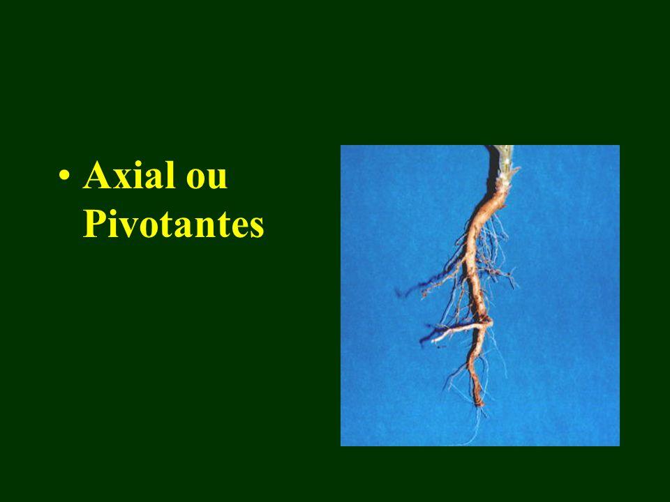 Axial ou Pivotantes