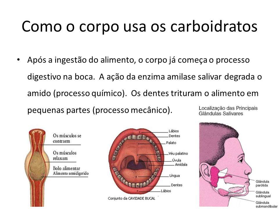 Como o corpo usa os carboidratos Após a ingestão do alimento, o corpo já começa o processo digestivo na boca. A ação da enzima amilase salivar degrada