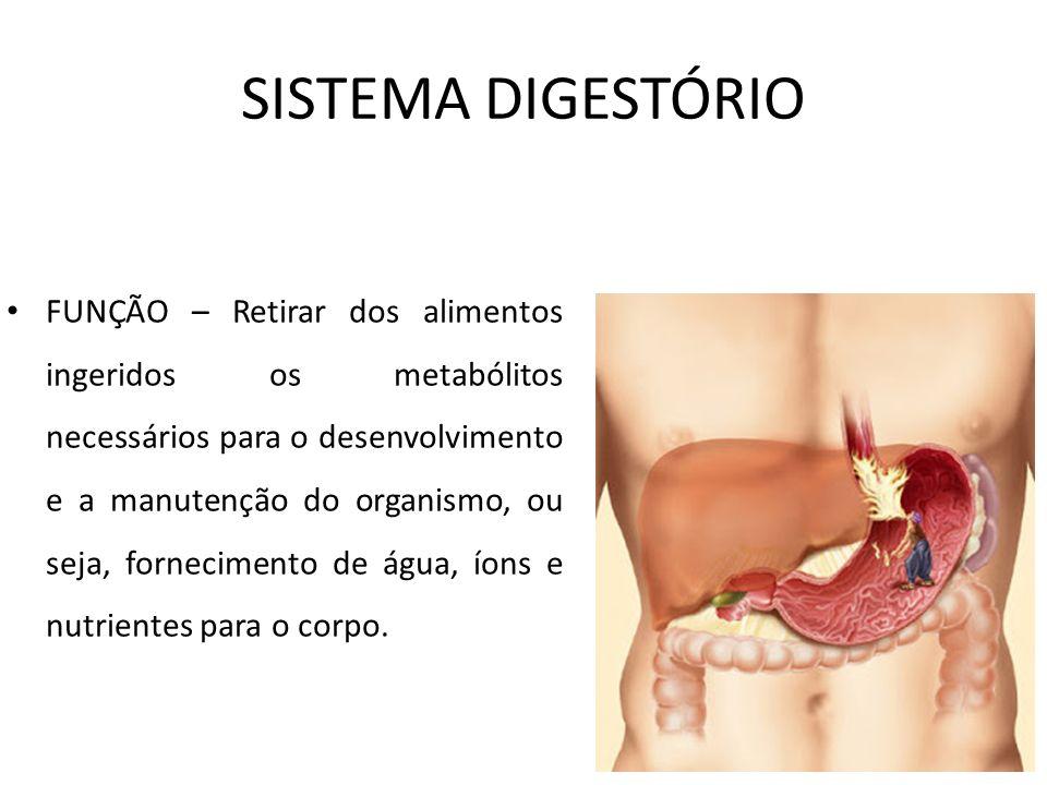 SISTEMA DIGESTÓRIO FUNÇÃO – Retirar dos alimentos ingeridos os metabólitos necessários para o desenvolvimento e a manutenção do organismo, ou seja, fo