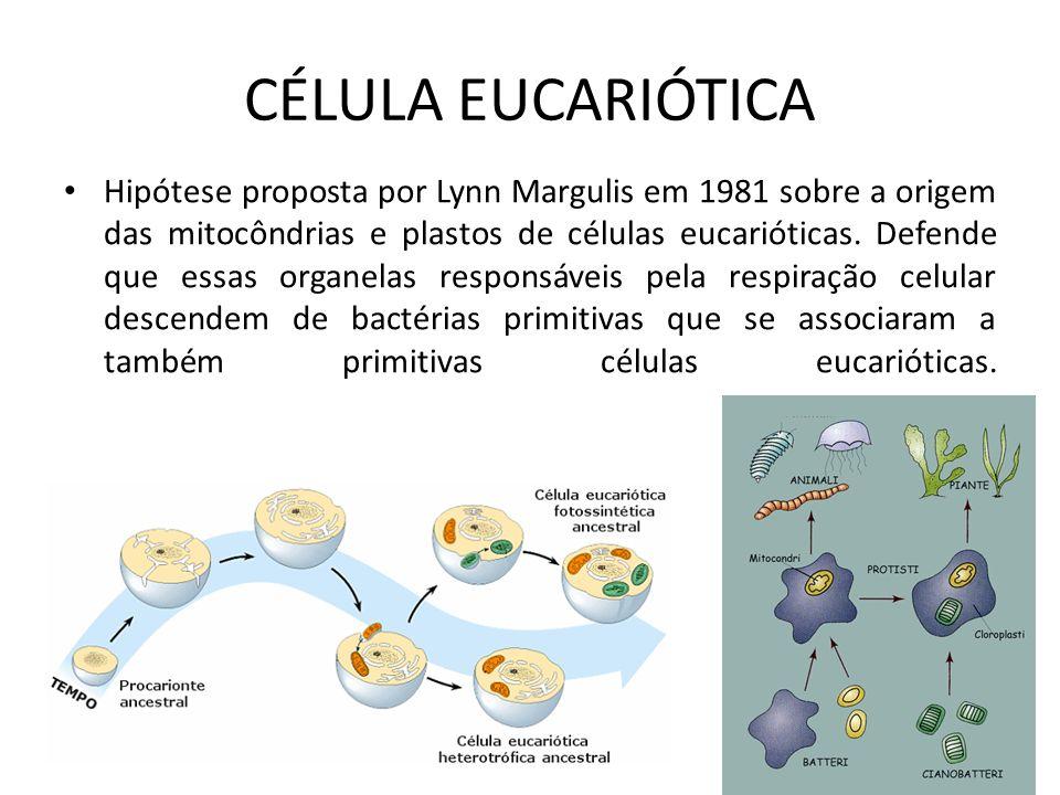CÉLULA EUCARIÓTICA Hipótese proposta por Lynn Margulis em 1981 sobre a origem das mitocôndrias e plastos de células eucarióticas. Defende que essas or
