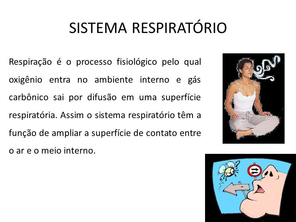 SISTEMA RESPIRATÓRIO Respiração é o processo fisiológico pelo qual oxigênio entra no ambiente interno e gás carbônico sai por difusão em uma superfíci