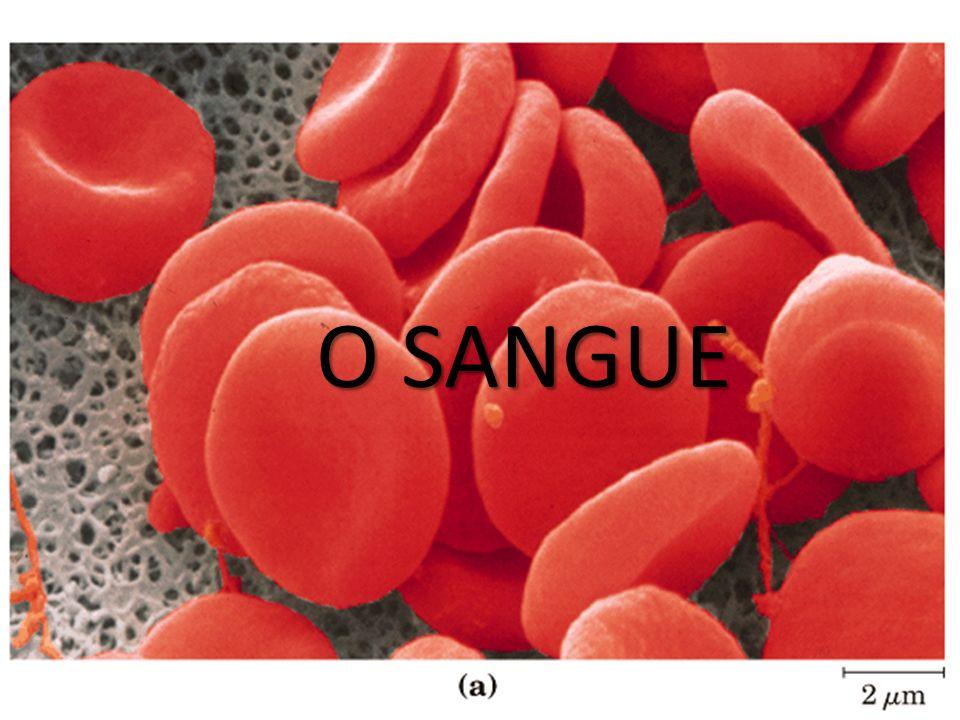 Sistema sanguineo O SANGUE