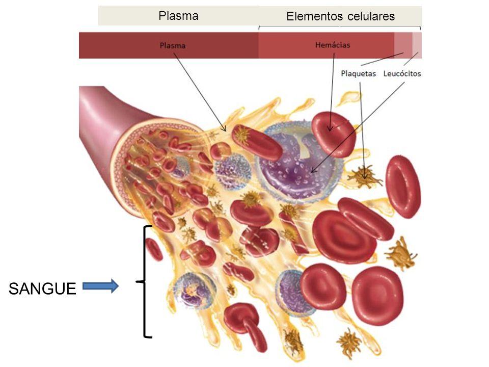Elementos celulares Plasma SANGUE
