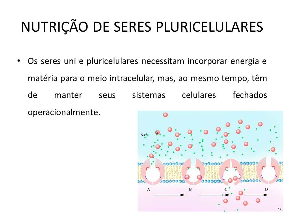NUTRIÇÃO DE SERES PLURICELULARES Os seres uni e pluricelulares necessitam incorporar energia e matéria para o meio intracelular, mas, ao mesmo tempo,