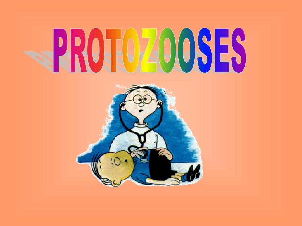 Cada trofozoíto que invade uma hemácia passa por um processo assexuado de reprodução, a divisão múltipla, originando de 6 a 36 fromas chamadas merozoítos.