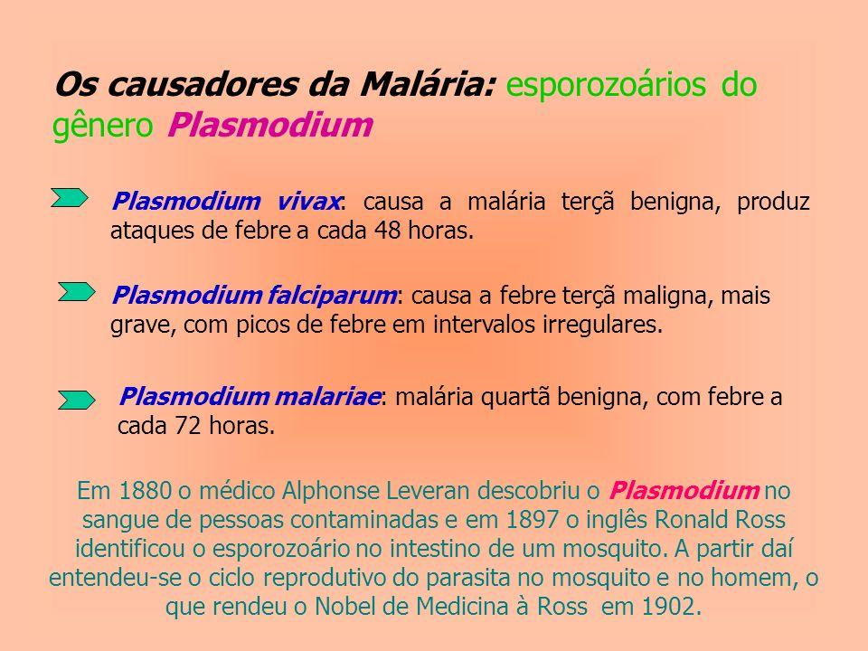 Os causadores da Malária: esporozoários do gênero Plasmodium Plasmodium vivax: causa a malária terçã benigna, produz ataques de febre a cada 48 horas.