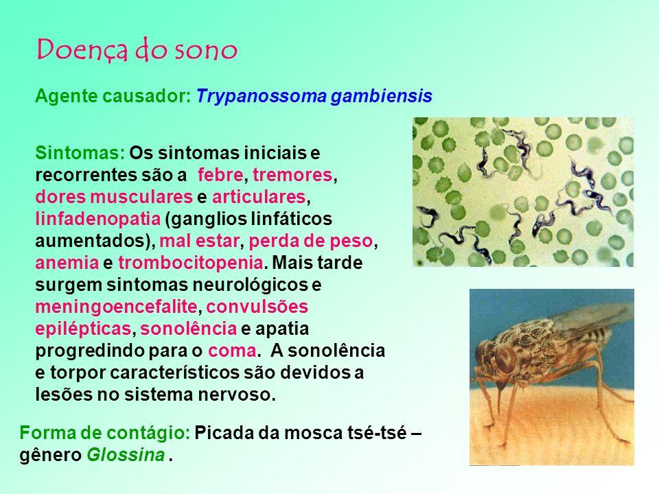 Mosquito-palha ou birigüí Phlebotomus