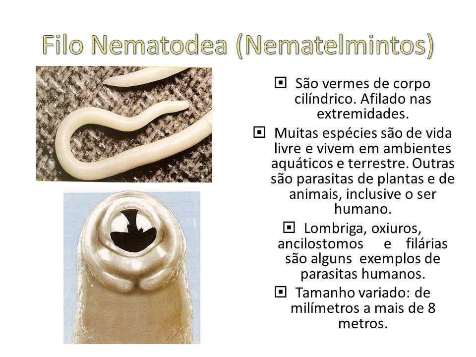 São vermes de corpo cilíndrico.Afilado nas extremidades.