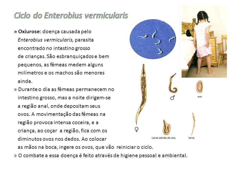 » Oxiurose: doença causada pelo Enterobius vermicularis, parasita encontrado no intestino grosso de crianças. São esbranquiçados e bem pequenos, as fê