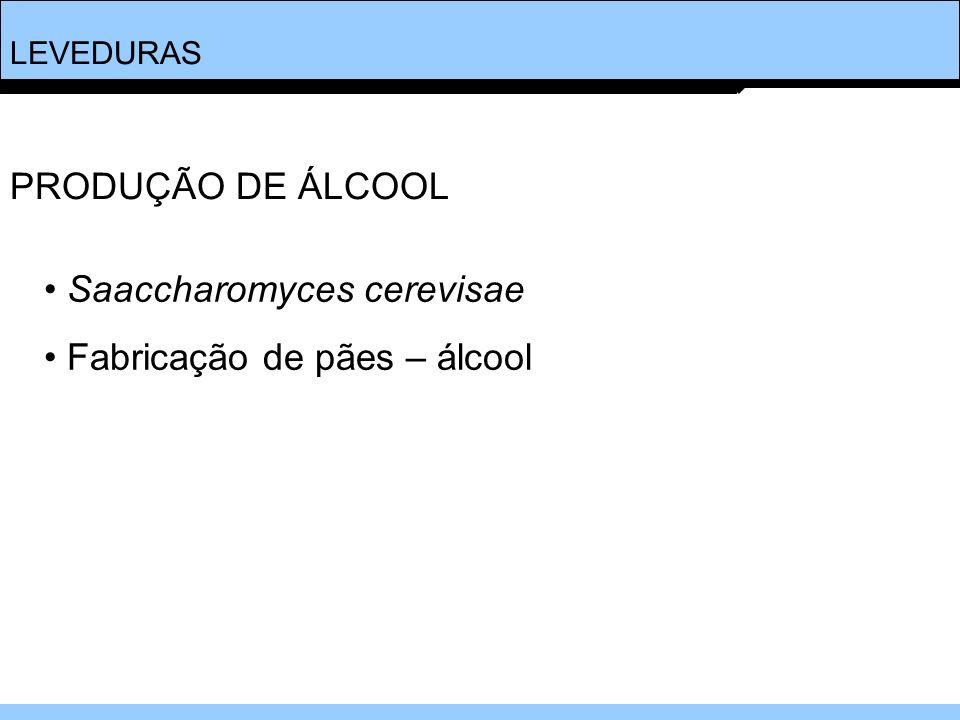 LEVEDURAS Saaccharomyces cerevisae Fabricação de pães – álcool PRODUÇÃO DE ÁLCOOL