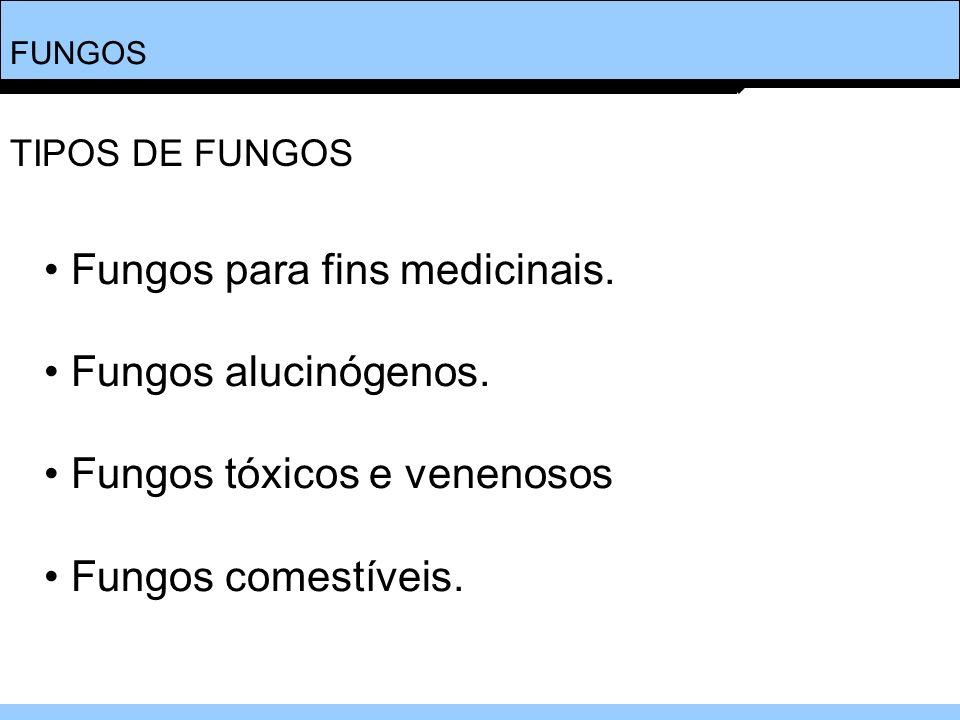 FUNGOS Fungos para fins medicinais. Fungos alucinógenos. Fungos tóxicos e venenosos Fungos comestíveis. TIPOS DE FUNGOS