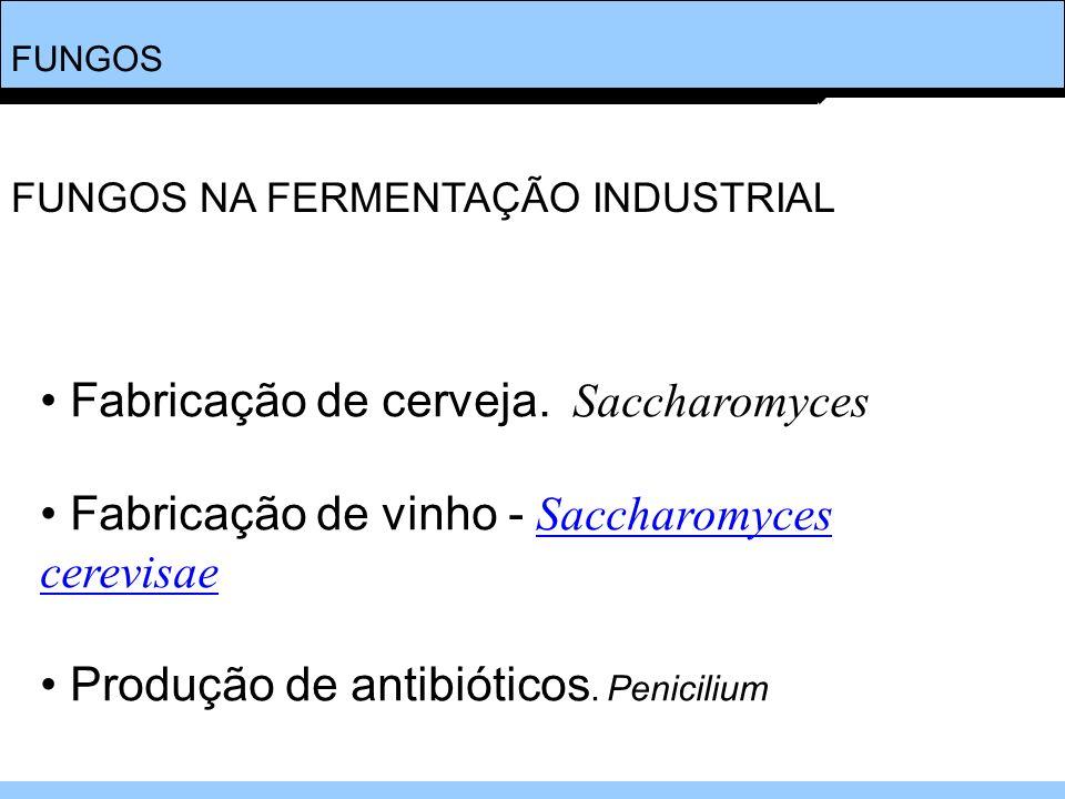 FUNGOS Fabricação de cerveja. Saccharomyces Fabricação de vinho - Saccharomyces cerevisaeSaccharomyces cerevisae Produção de antibióticos. Penicilium