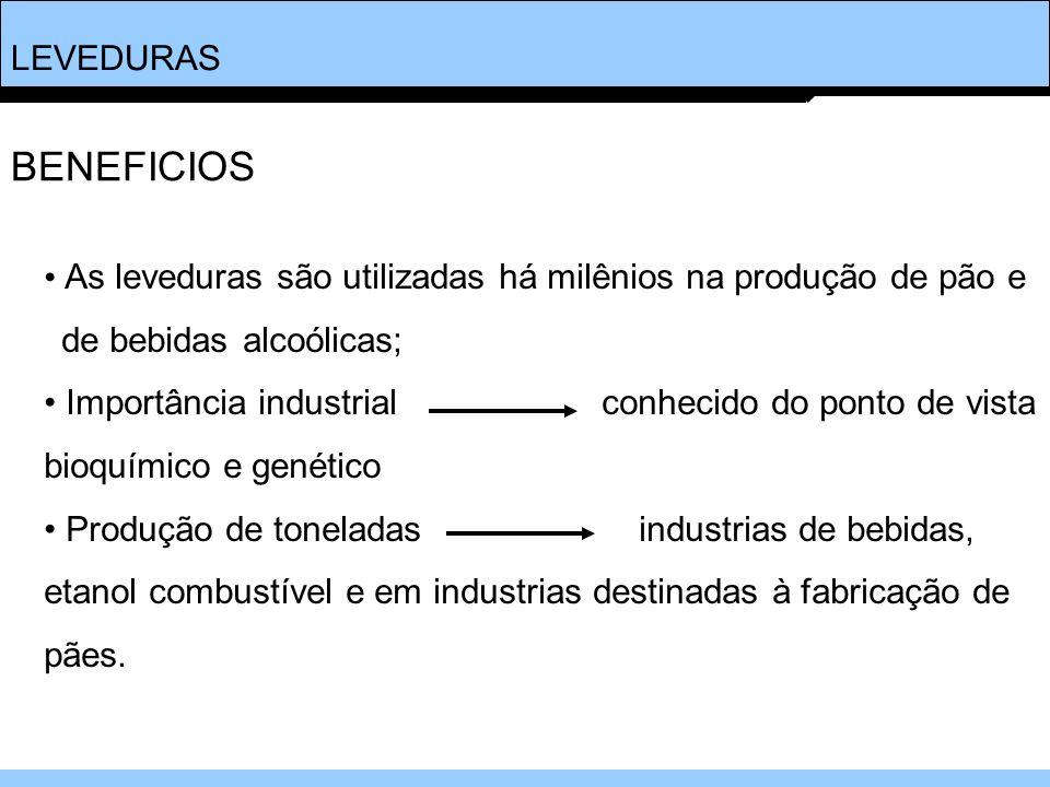 LEVEDURAS As leveduras são utilizadas há milênios na produção de pão e de bebidas alcoólicas; Importância industrial conhecido do ponto de vista bioqu