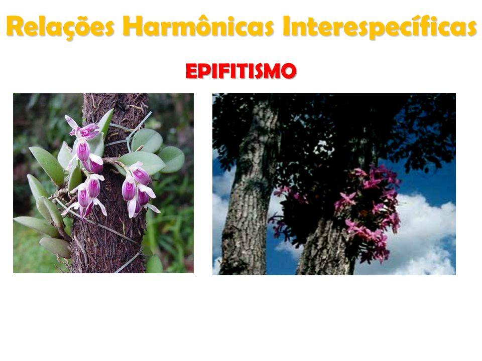 Relações Harmônicas Interespecíficas EPIFITISMO
