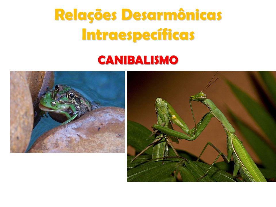 Relações Desarmônicas Intraespecíficas CANIBALISMO