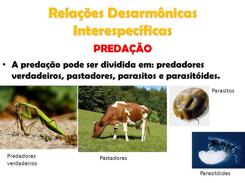 Relações Desarmônicas Interespecíficas A predação pode ser dividida em: predadores verdadeiros, pastadores, parasitos e parasitóides. Predadores verda