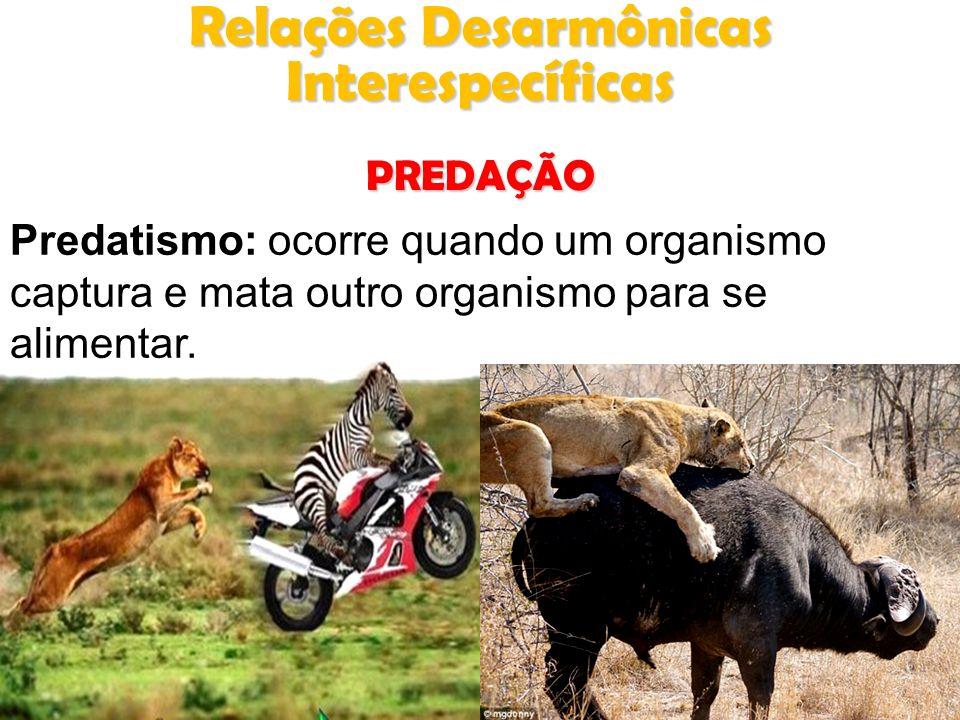 Predatismo: ocorre quando um organismo captura e mata outro organismo para se alimentar. Relações Desarmônicas Interespecíficas PREDAÇÃO