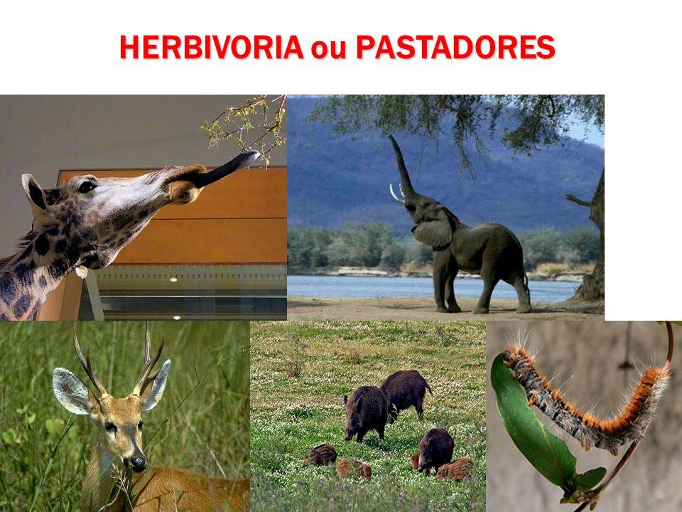 HERBIVORIA ou PASTADORES