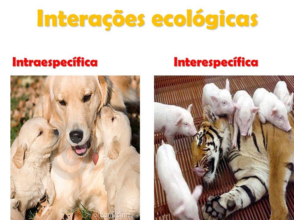 Relações Desarmônicas Interespecíficas COMPETIÇÃO INTERESPECÍFICA