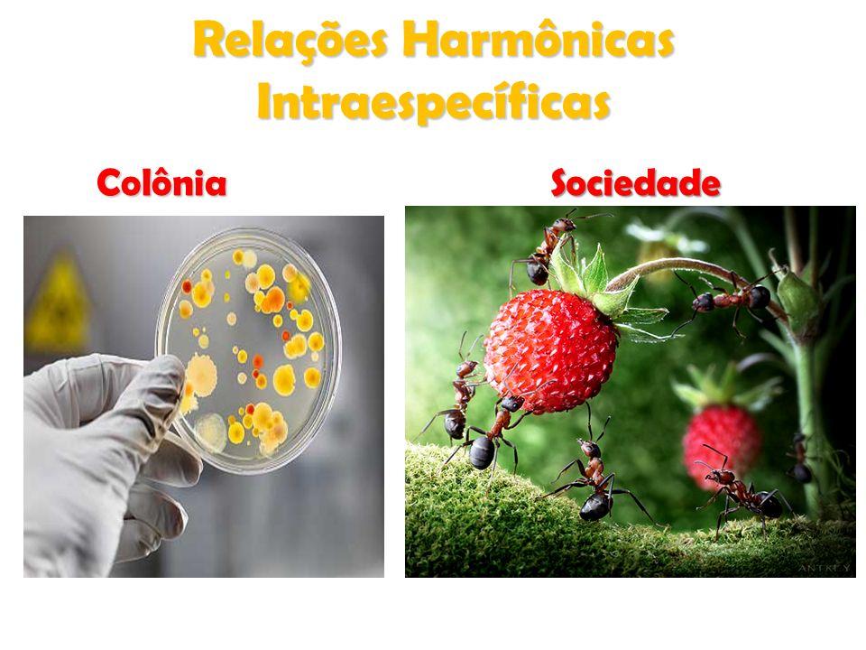 SUGADORA ou HAUSTÓRIA holoparasitas SUGADORA ou HAUSTÓRIA -> Sugam a seiva elaborada (floema).
