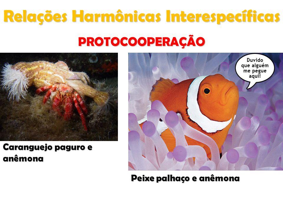 Relações Harmônicas Interespecíficas PROTOCOOPERAÇÃO Caranguejo paguro e anêmona Peixe palhaço e anêmona