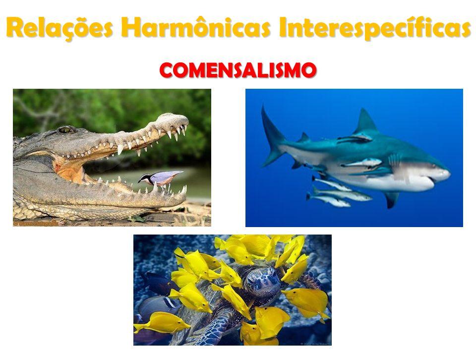 Relações Harmônicas Interespecíficas COMENSALISMO