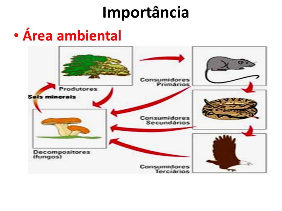 Importância Área ambiental