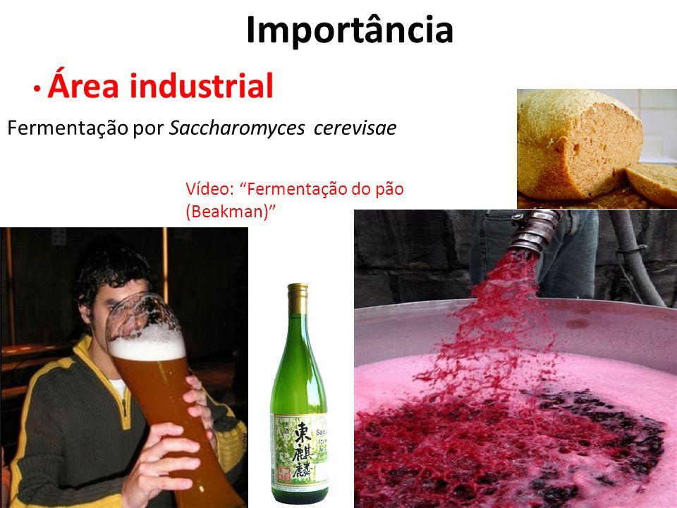 Importância Área industrial Fermentação por Saccharomyces cerevisae Vídeo: Fermentação do pão (Beakman)